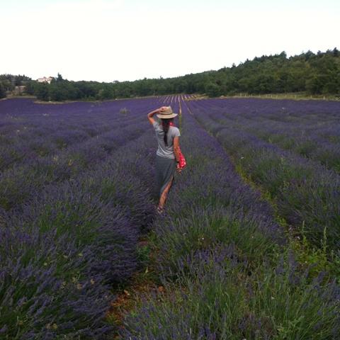 ROSA per la Provença